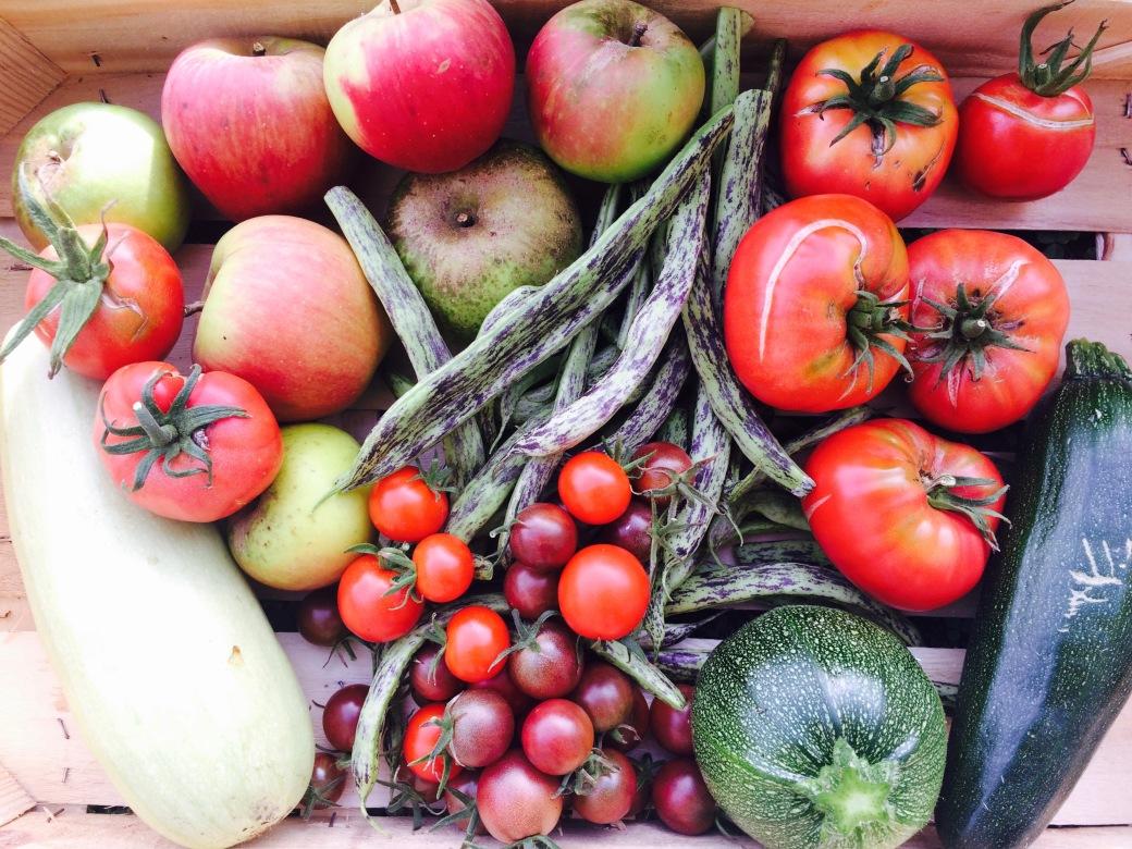 Récolte Courgette - Haricot - Pomme - Tomate cerise